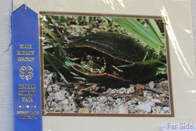 Sallys Turtle