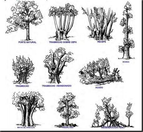 Tipología árboles