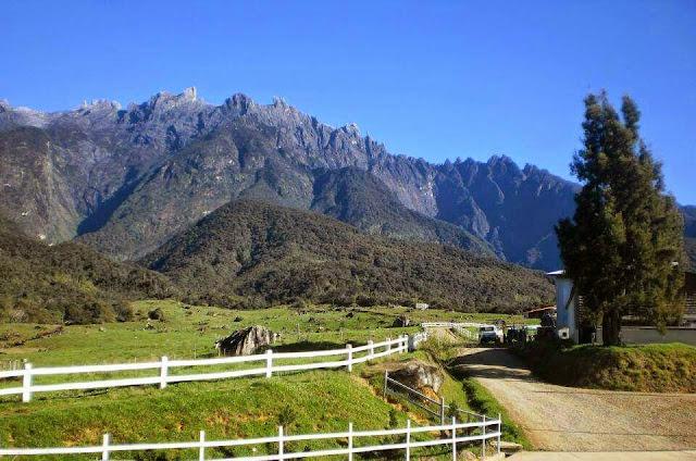 Desa Cattle mesilau, kundasang, sabah, ladang tenusu,ranau
