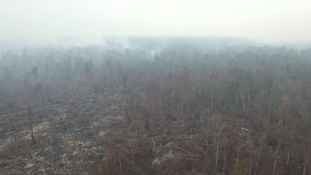 Forest and peatland fires on the border of Gunung Palung National Park, West Kalimantan, September 2015. This forest is orang-utan habitat. Photo: Greenpeace