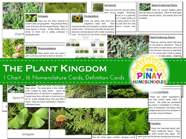 the plant kingdom the pinay homeschooler