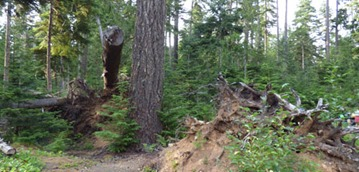 Storm Damage from Years Ago, Heart of the Hills Campground