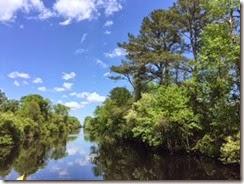 Dismal Swamp Sunny Day 3