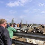 Werkbezoek gemeenteraad, college B en W, ambtenaren bij 4 agrarische bedrijven - Foto's M. Ritzema