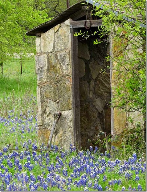 Bluebonnets_stonewellhouse