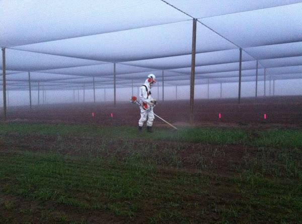 greenpeace crop massacre