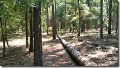 Natural bench along trail