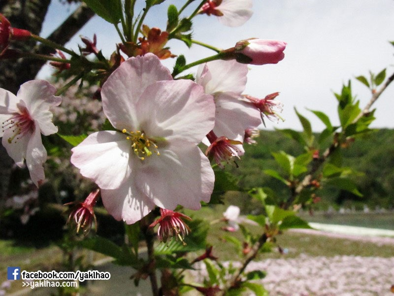 JapanTripDay6_05