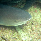 Meeda !!!!- Snorkel no Cerro Brujo - Galápagos