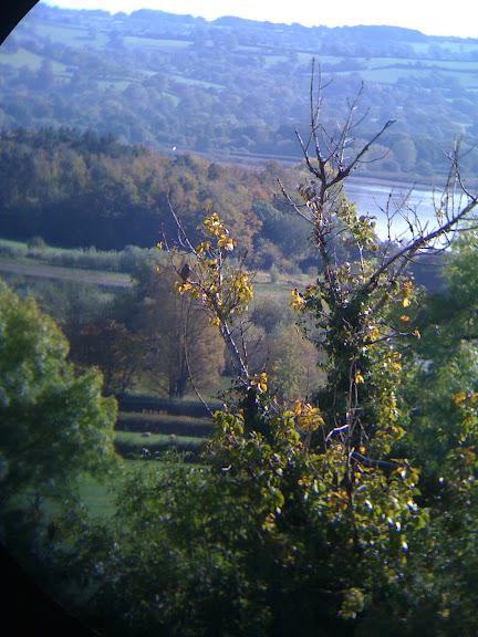 A male Kestrel sits in a tree on the hillside