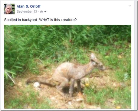 creature FB