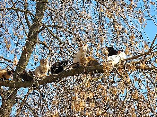 Деревья аист