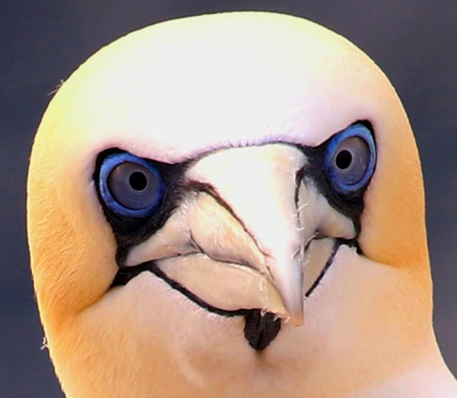 by Luz UK - Animals Birds (  )