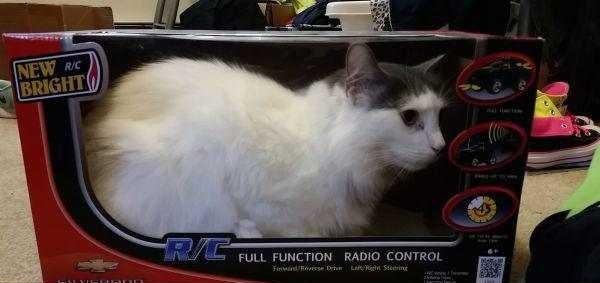Os gatos não são muito bons em esconde-esconde 8