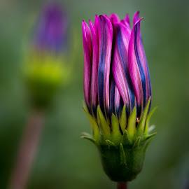 Good Night by Mark Ritter - Flowers Single Flower ( macro, nature, flora, beautiful, garden, closeup, floral, flower )
