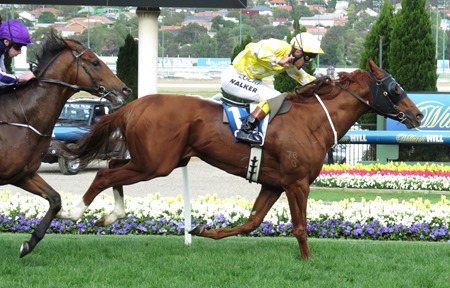 cox plate_criterion_highland reel