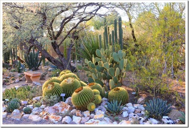 131203_TucsonBotanicalGarden_120