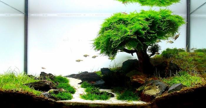 pflanzen terrarium idee