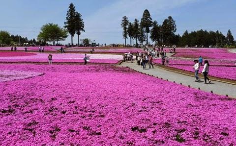 parque-hitsujiyama