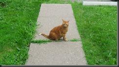 Hiro Surveys the Sidewalk