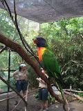 A lorikeet at the Nashville Zoo 09032011c