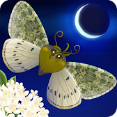 Flutter: Starlight APK Icon
