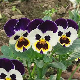 Selfie by Tutu Bains Kottai - Flowers Flowers in the Wild (  )