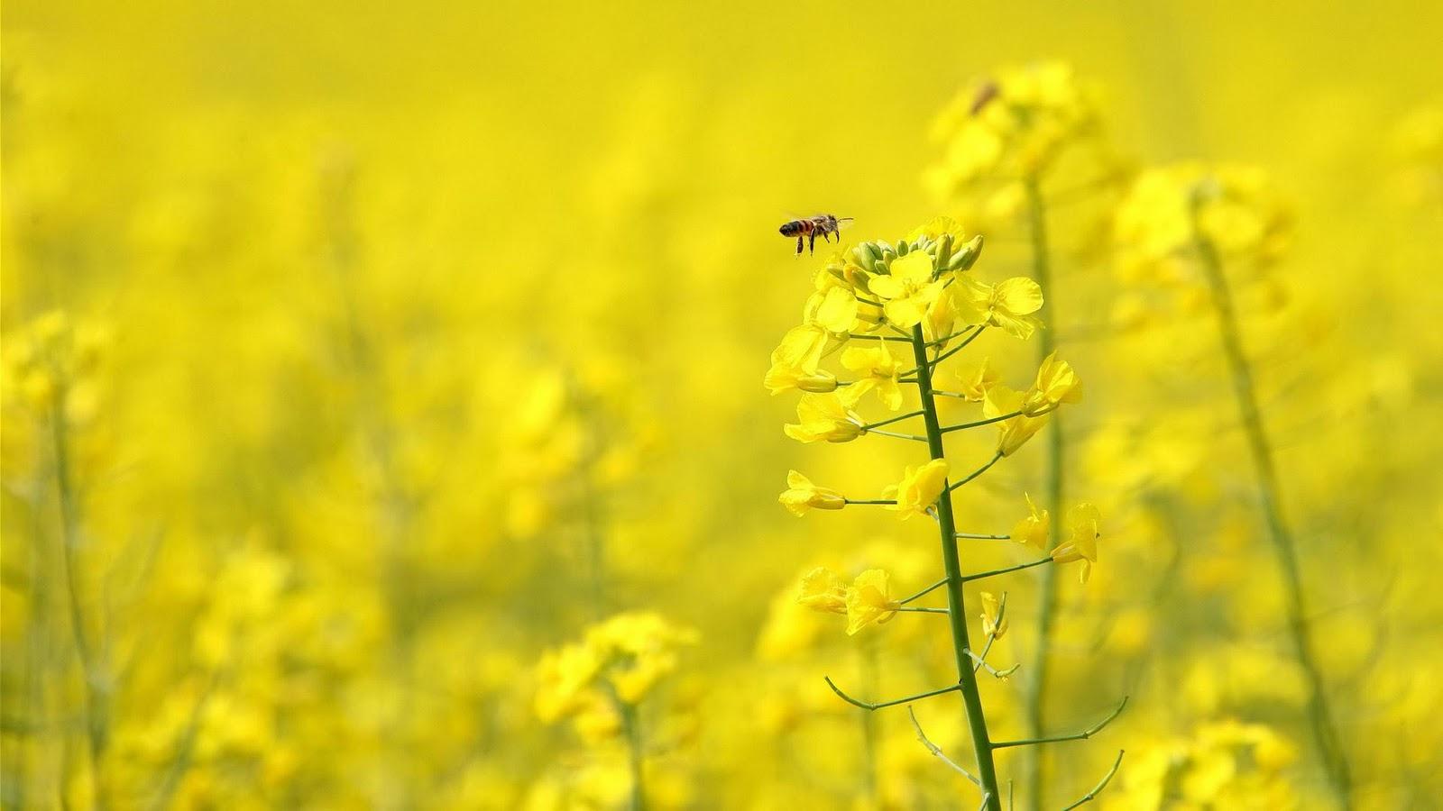 Meadow Honey hd wallpaper
