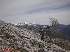 Lapiaz, árbol y Cotiella ©aunpasodelacima