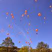 2015  » 2015 Koningsdag Dobbe-eiland