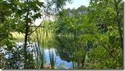 T-Shirt Pond