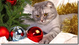 gatos divertidos buscoimagenes (9)