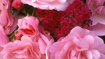 Beautiful flowers 2012