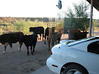 Congregating at Fry Ranch 12/9