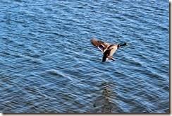 Carsington Water 031