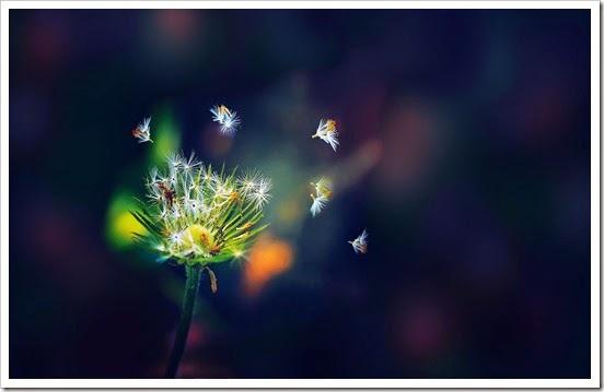 background-wallpapers-flower-dandelion-color-wallpaper-white-green-gdefon-cvetok-original-oduvanchik-semena-zelenyj-cveta-belyj