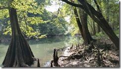 Chipola river view