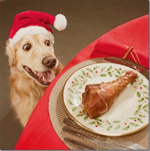 perro navidad (2)