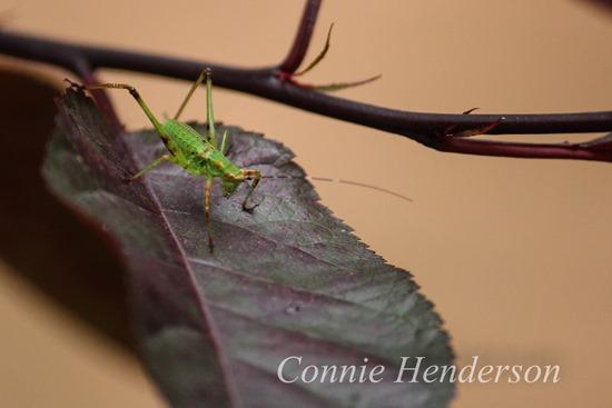 Grasshopper July 24