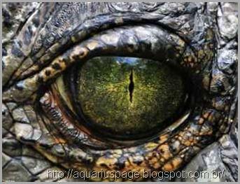 olhos-reptilianos
