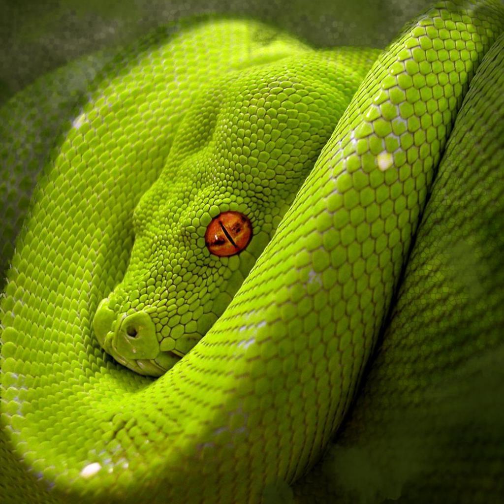 Snake Eye iPad Wallpaper