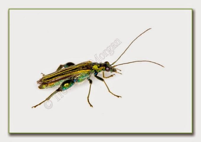 Bug 8 Thick Leg