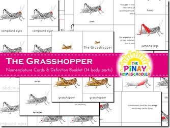 Grasshopper 3-part nomenclature cards