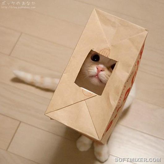 1376889985_megakote.ru_cats_m0000001_0597