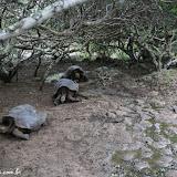 Taratugas gigantes - San Cristóbal, Galápagos