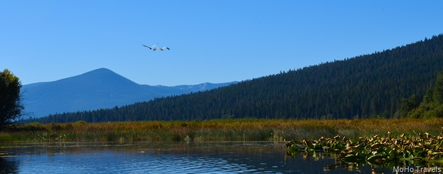 the sandhill cranes take off for us