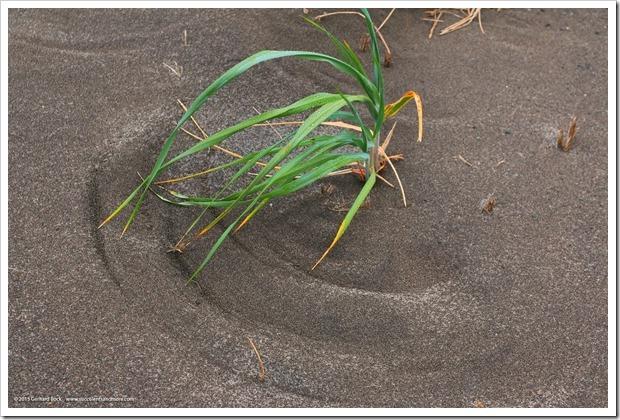 150908_Adak_seagrass_swish_WM