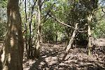 Dlinza Forest