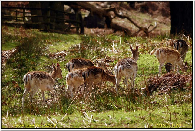 Bradgate Country Park - May