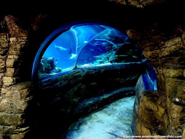 acuario-de-londres.JPG